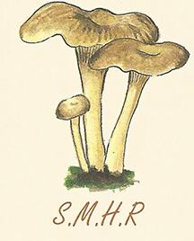 Logo smhr